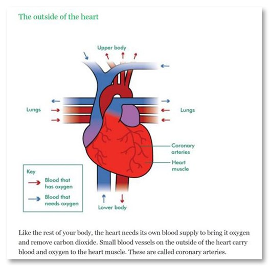 This image shows an example of an illustration in an eBook. It is in a colour illustration of the outside of the heart. There is a caption above the illustration and labels around it.