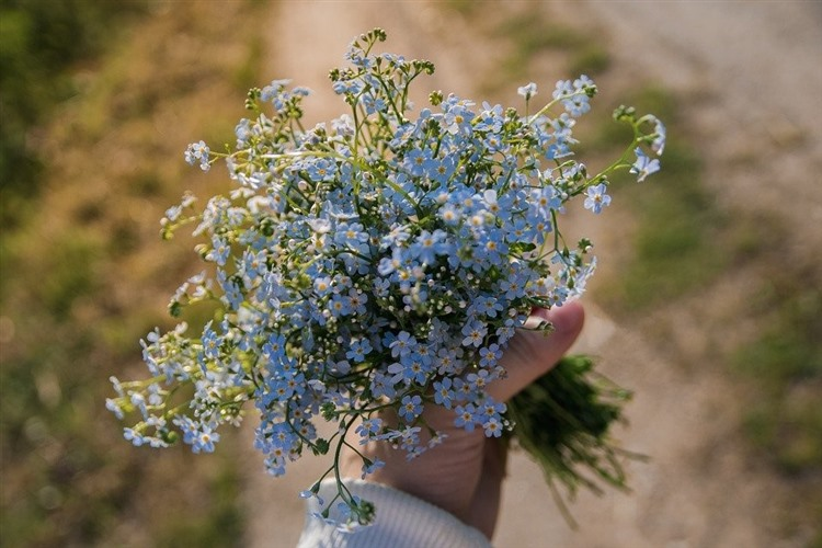 An image of a bouquet of forget-me-nots, small blue flowers